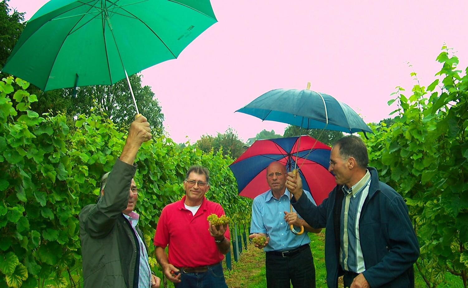 Broers van Albert op bezoek in de wijngaard...