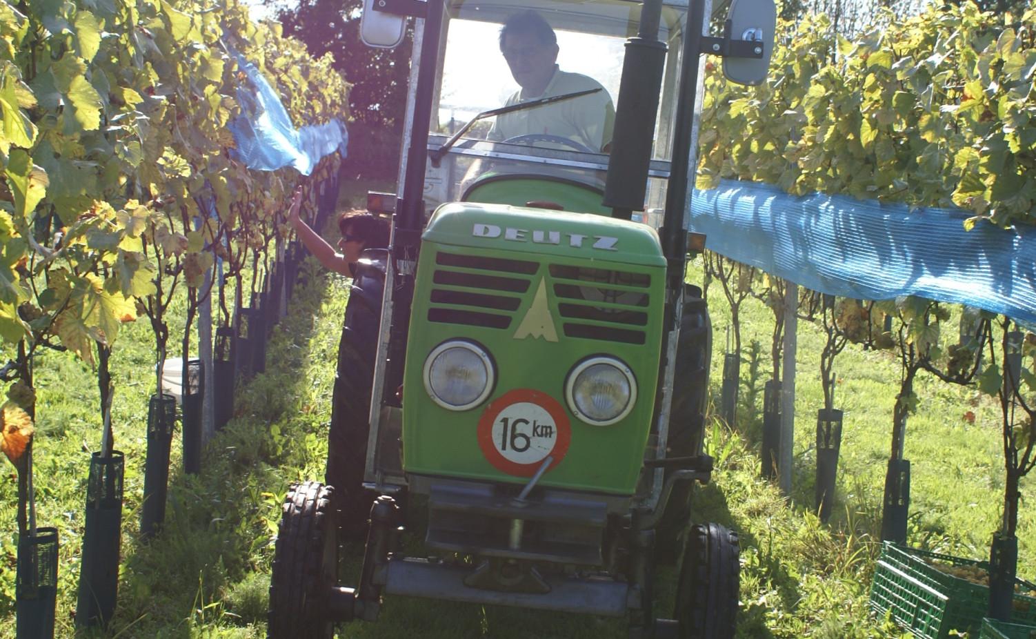 Op de kleine tractor door de wijngaard...