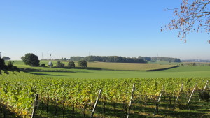 Op een rustige dag voor de oogst....